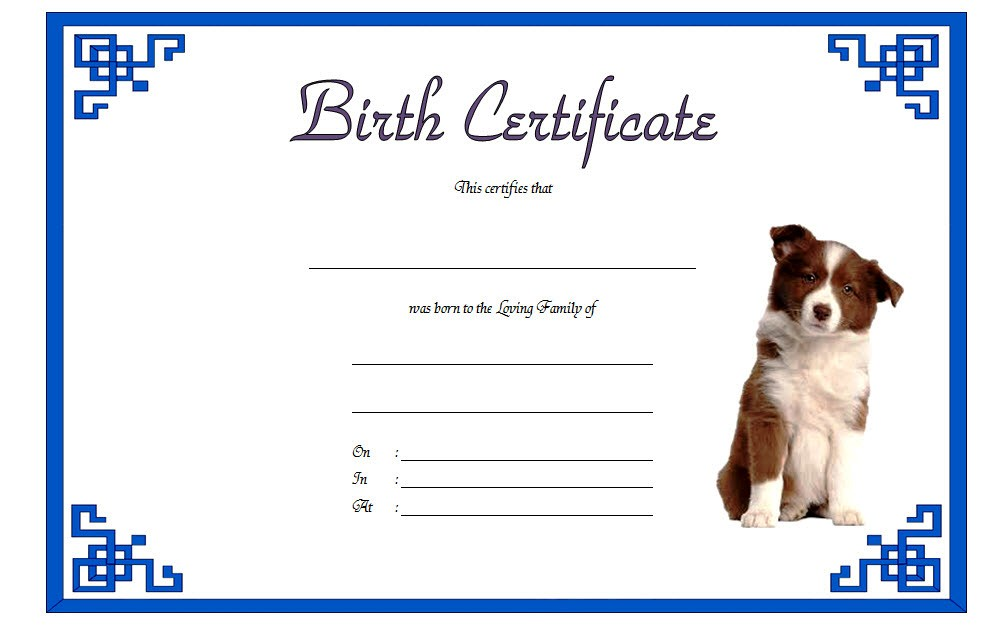 puppy birth certificate template, dog birth certificate template, blank puppy birth certificate template, blank dog birth certificate, free dog birth certificate template microsoft word, diy dog birth certificate, dog birth certificate pdf dog birth certificate fill in, fill in birth certificate template, official dog birth certificate, free pet birth certificate template, puppy birth certificate pdf, free downloadable puppy birth certificate